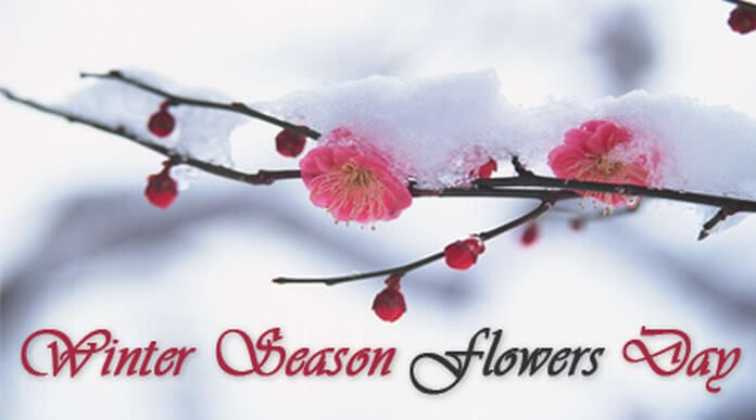Winter Season Flowers Day messages