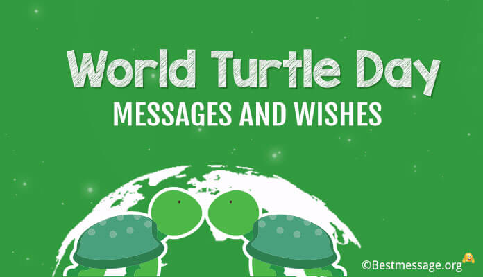 World Turtle Day Messages, World Turtle Day Wishes Photo, Image