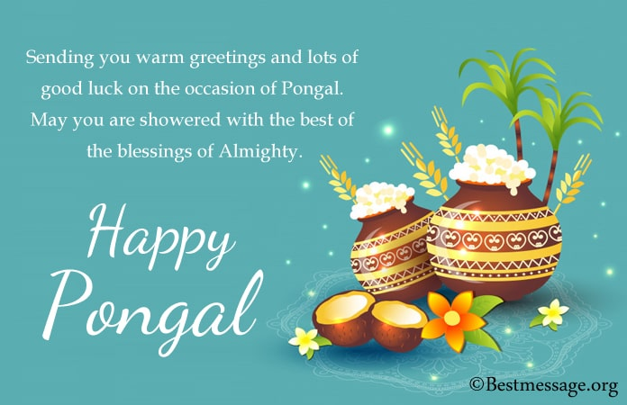 Happy Pongal Messages in English, Pongal wishes Greeting Images