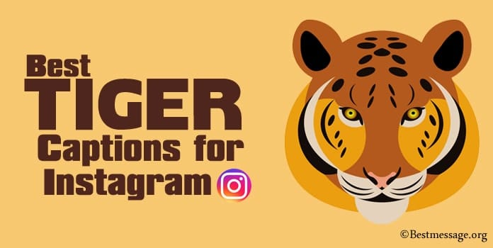 Tiger Captions for Instagram - Tiger Instagram Quotes