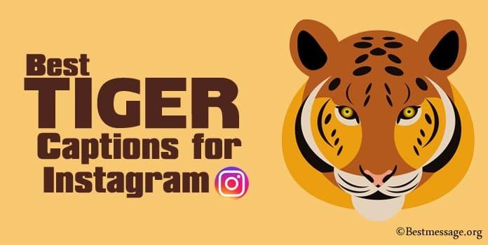 Tiger Captions for Instagram - Tiger Instagram Quotes
