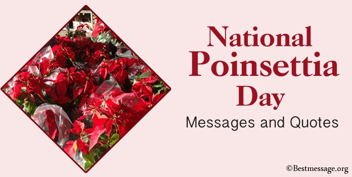 Happy Poinsettia Day Messages, Poinsettia quotes
