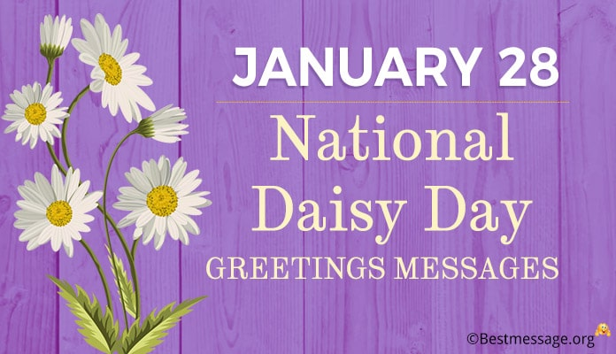 National Daisy Day Greetings Messages