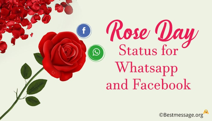 Rose Day Status Messages - Rose Day Whatsapp Status, facebook