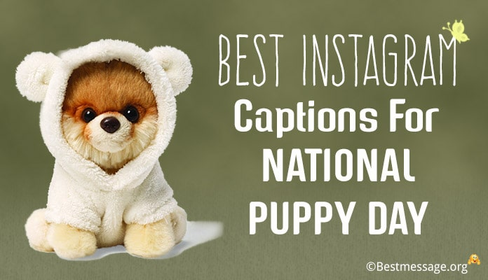 National Puppy Day Instagram captions - new puppy caption