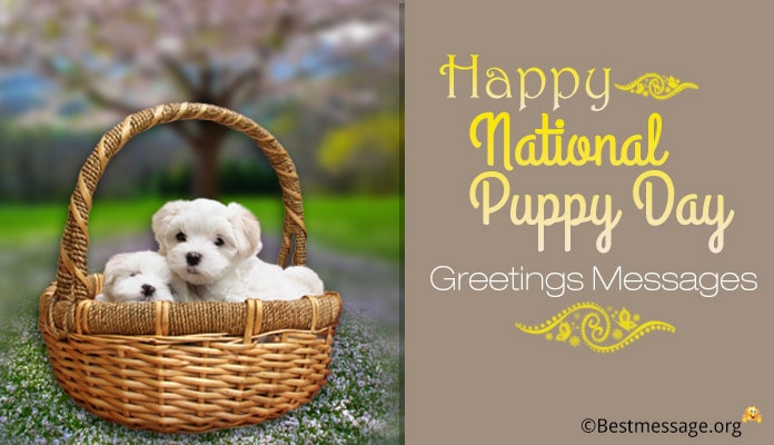 National Puppy Day Greetings Messages Images