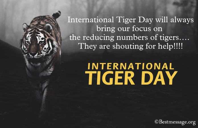 Tiger Inspirational Quotes, Tiger Quotes Sayings