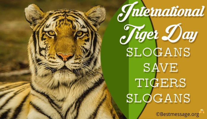 World Tiger Day Slogans - Save tiger slogans, catchy tiger slogan
