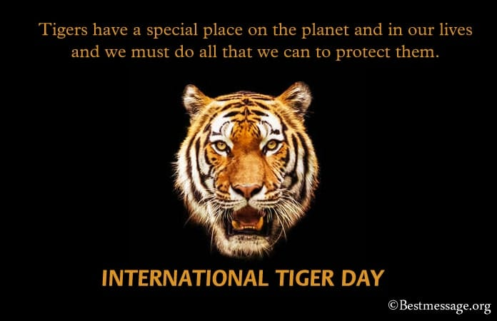 Tiger Day Messages, Tiger Quotes Wishes Images