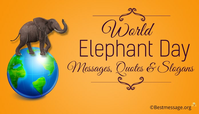 World Elephant Day Messages, Elephant Quotes, Save Elephant Slogan