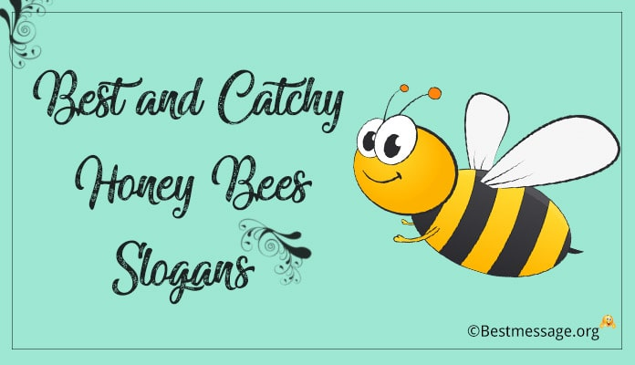 Catchy Honey Bees Slogans, Save Bees Slogans, Bee Quotes