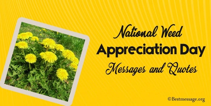 Happy Weed Appreciation Day Messages, Weed Appreciation Quotes
