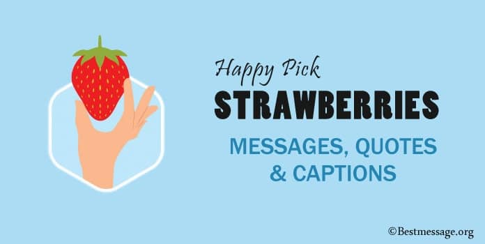 Happy Pick Strawberries Day Messages, Strawberries Quotes, Captions