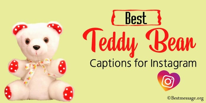 Best Teddy Bear Instagram Captions, Teddy Bear Quotes, Status