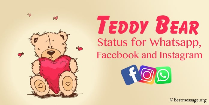Teddy Bear Status for Whatsapp, Facebook Messages, Instagram Status