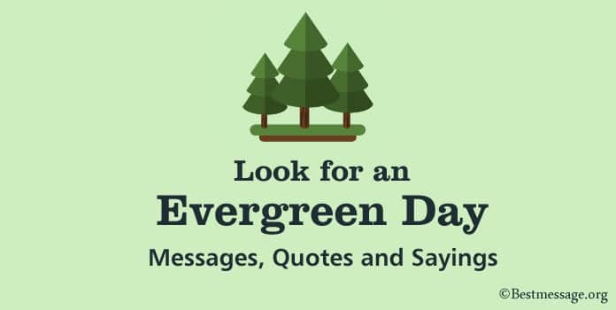 Happy Look for an Evergreen Day Messages, Quotes and Sayings