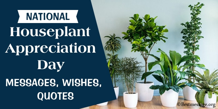 Happy Houseplant Appreciation Day Wishes Messages, Quotes