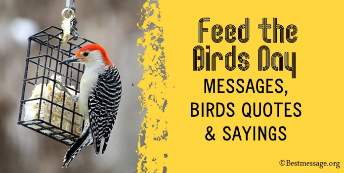Feed the Birds Day Messages, Birds Quotes Sayings