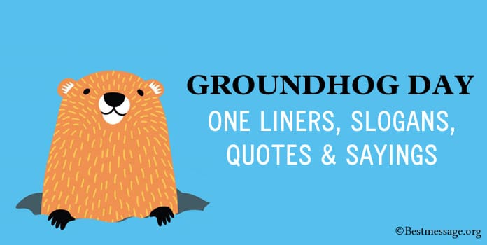 Groundhog Day One Liners, Slogans, Groundhog Quotes Sayings