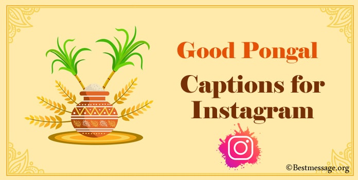 Pongal Captions for Instagram, Pongal Insta Captions