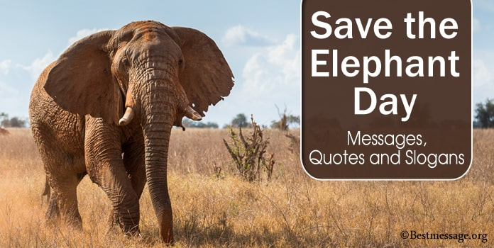 Save the Elephant Day Messages, Quotes, Elephant Slogans