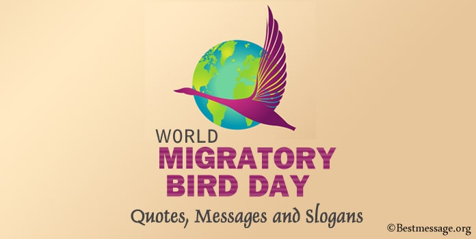 Migratory Bird Day Quotes, Messages, Save Birds Slogans