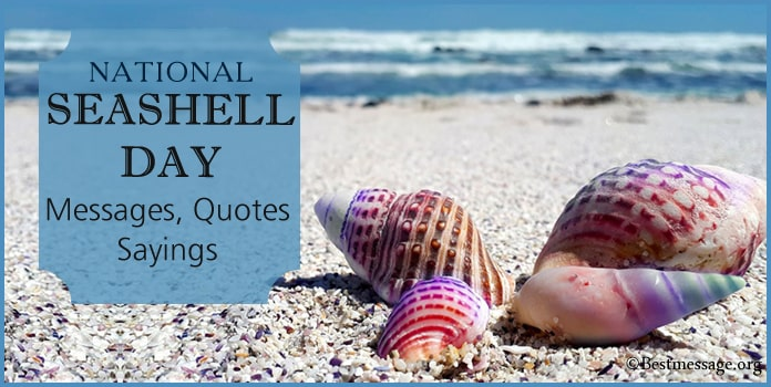 National Seashell Day Messages, Seashell Quotes Sayings