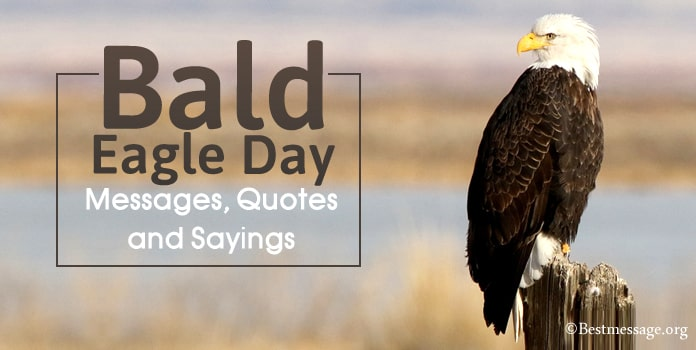 Bald Eagle Day Messages, Bald Eagle Quotes Sayings