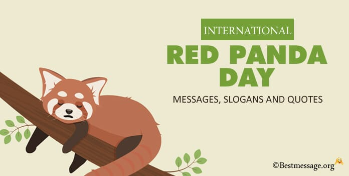 International Red Panda Day Messages Slogans Quotes